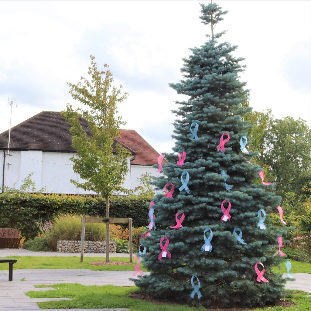 A fir tree decorated with pink and blue bows for Baby Loss Awareness Week